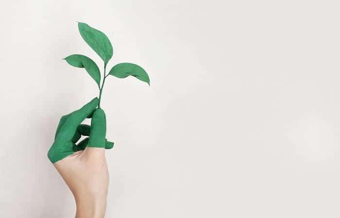 estudio de impacto ambiental cadiz1